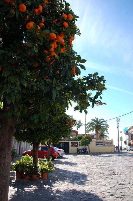 Platz mit Orangenbäumen