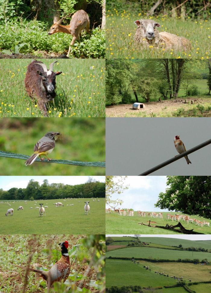Collage mit Tieren auf dem Cotswold Way