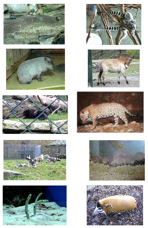 Zootiere1.jpg