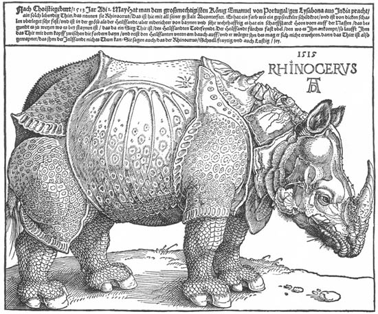 duerer_rhino.jpg