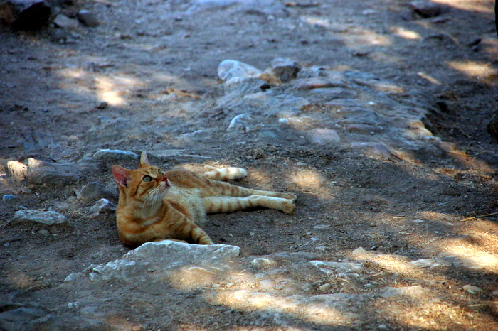 greece_acropolis_cat1