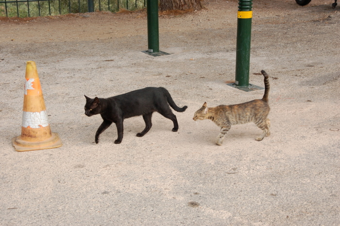 greece_mycenae_cats