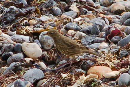 uk_birds_2009_1