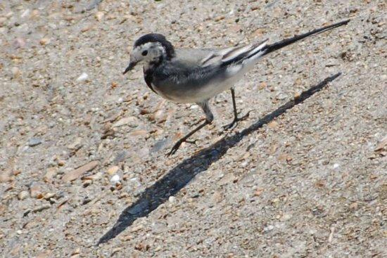uk_birds_2009_2