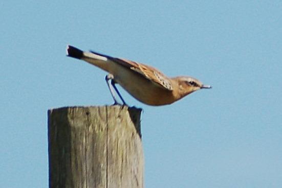 uk_birds_2009_4