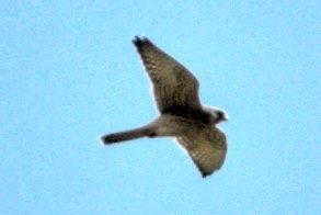uk_birds_2009_6