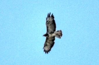 uk_birds_2009_7