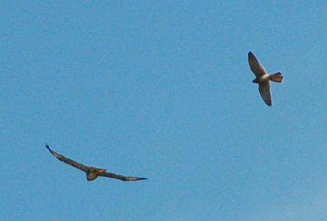 uk_birds_2009_8