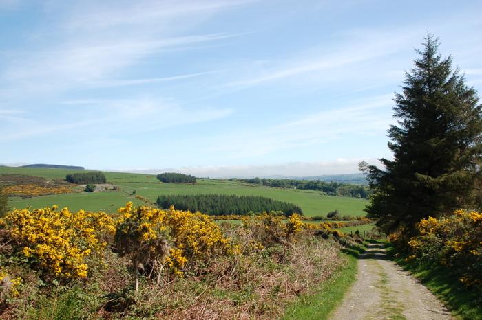 Landschaft mit Stechginster