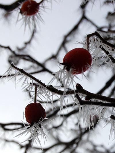 winter2007-1.jpg